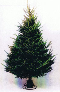 Heavy Density Balsam Fir Christmas Tree