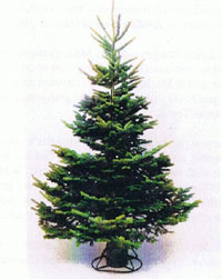 Light density balsam fir christmas tree click for more info