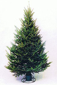 Medium density balsam fir christmas tree click for more info